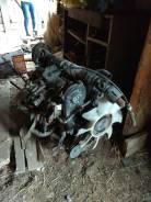 Продам двигатель от Мазда бонго RF