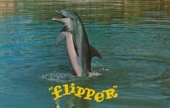 Флипер, 205/85R16