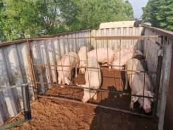 """Перевозка скота """"скотовоз"""" КРС, Свиньи (контейнеровоз) площадки"""