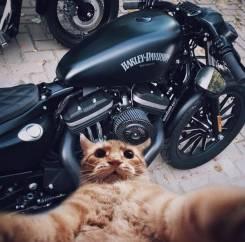 Ремонт, обслуживание мотоциклов